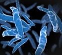 LSTM scientists describe new approach to screening potential TB treatments