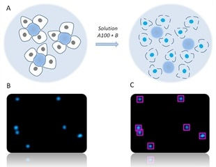 Determination of Cell Count and Viability of Cancer Cells Grown on Microcarriers using NucleoCounter® Instruments