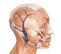 Special review highlights benefits of using botulinum neurotoxin for treating facial wrinkles
