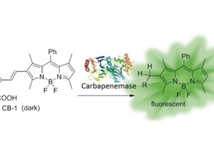 Chinese scientists develop simple fluorescence-based assay to detect carbapenem-resistant pathogens