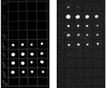 Flexible Method for Imaging Fluorescent Western Blot