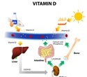 Rheumatoid Arthritis and Vitamin D