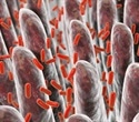 Scientists identify novel mutations in bacteria that promote evolution of antibiotic resistance