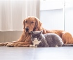 Tips to reduce animal dander in home