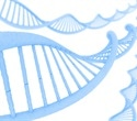 Myriad Genetics presents positive results of new hereditary cancer test at 36th annual conference of NSGC