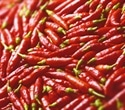 Receptor that detects heat of red chili pepper may help protect the brain after TBI
