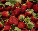 Strawberries most effective at inducing cancer cell death