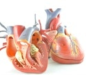 Study elucidates how aerobic exercise protects the sick heart