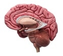 Brain abnormality linked to general risk for mental illness