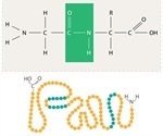 Macromolecules: Polysaccharides, Proteins and Nucleic Acids