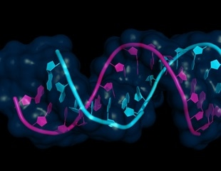 Researchers develop new strategy to improve siRNA stability
