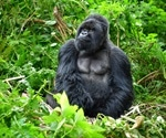 Scientists find gorilla origins in two human AIDS virus lineages
