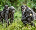 Ape gestures offer clues to evolution of human communication