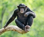 Chimpanzees from African sanctuaries carry drug-resistant strains of Staph