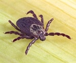 Study identifies conservation management activities that could affect Lyme disease risk