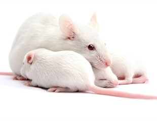Mouse sperm subjected to cosmic environment still produces healthy offspring, report researchers