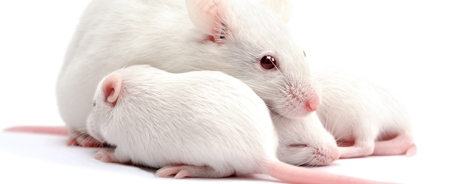 Mouse sperm subjected to cosmic environment still produces healthy offspring