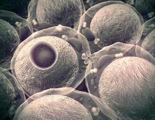 Researchers report new way to map the inner workings of a living cell