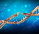 Scientists aim is to better understand effects of DNA damage on aging process