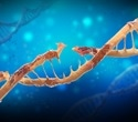 Study sheds light on night work−cancer link