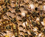 New family of peptides in wasp's venom may help develop better Parkinson's treatments