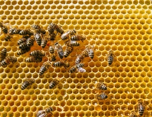 Bee venom may be effective treatment for eczema