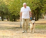 Dog ownership provides many health benefits for seniors