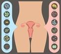 Uterine Microbiome