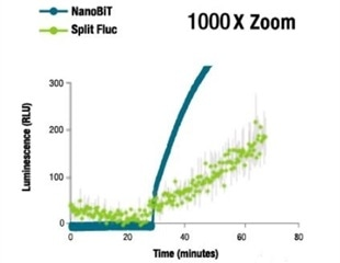 Using NanoBiT® Technology to Study the Dynamics of Protein Interactions in Live Cells