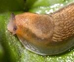 Slugs inspire a surgical bio glue