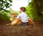 Genetic basis behind friendliness of dogs and humans uncovered in a new study