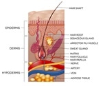 Hair Follicle Tumors