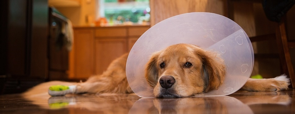 Study identifies 'caregiver burden' in owners of severely ill pets