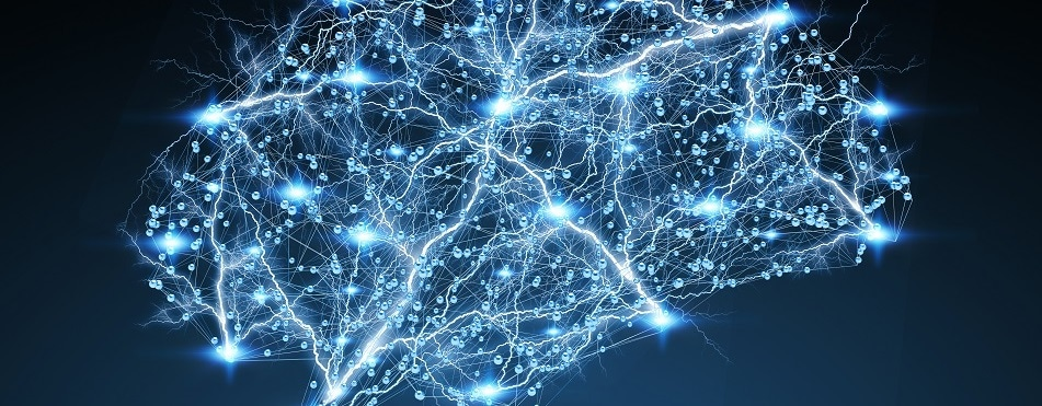 "Leading researchers join forces to create a ""standard model"" of the brain"