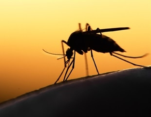 """Super malaria"" resistant to standard medications in South East Asia"