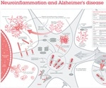 Abcam's New Poster on Neuroinflammation and Alzheimer's Disease