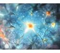 AMSBIO offers isogenic panels of neuronal iPSC derivatives