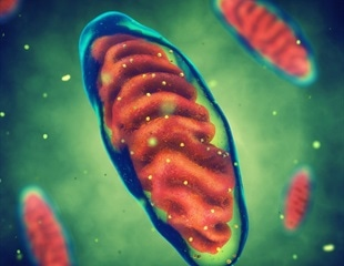 How fatal mitochondrial diseases may strike offspring of families with no history of the conditions