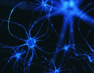 The effects of Huntington's disease can be seen as early as conception, finds new study