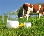 ​Estrogens found in cows' milk shown to pose no risk to adult health