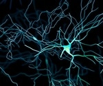 'Digital brain' recreates protein trafficking in the brain