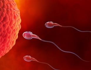 Researchers demonstrate epigenetic memory transmission via sperm