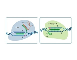 IDT to demonstrate CRISPR expertise at European-focused events