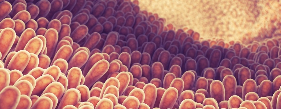 Gut-on-a-chip to model coeliac disease