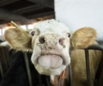 Mad Cow disease found on Aberdeenshire farm