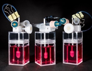 The Human Mini Heart-in-a-Jar That Could One Day Replace Animal Testing