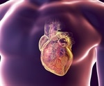 How flexing of blood vessels during a heartbeat might contribute to heart disease
