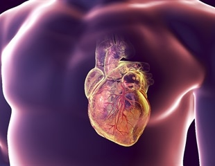 New mathematical model to study the behavior of the human heart