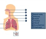 Accurate Breath Analysis with Breath Holding and End-Tidal Samples