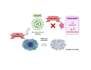 Researchers reveal promising method for delivering cancer virotherapy